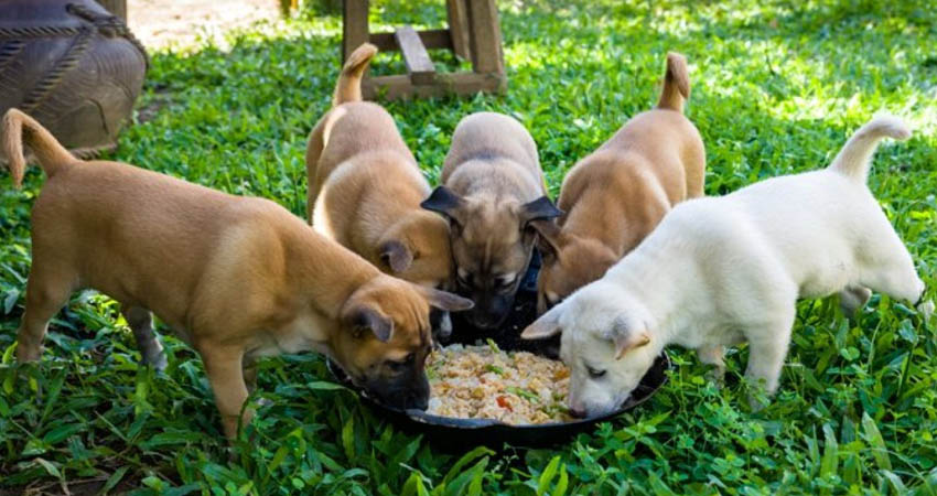 Monthly Meal Of Dog